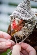 chicken_hat