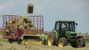 baling hay 1