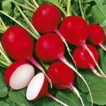 Cherry_Belle