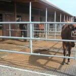 equestrian31-600x450
